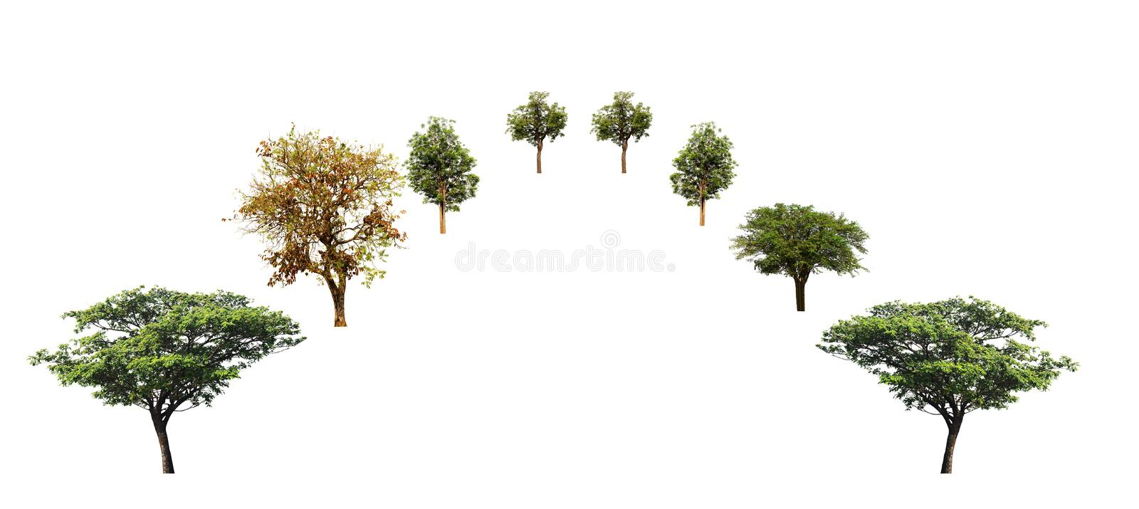 Set of trees, east Indian walnut tree, neem tree, Indian jujube tree isolated on white background. Set of trees east indian walnut neem jujube isolated white royalty free stock image