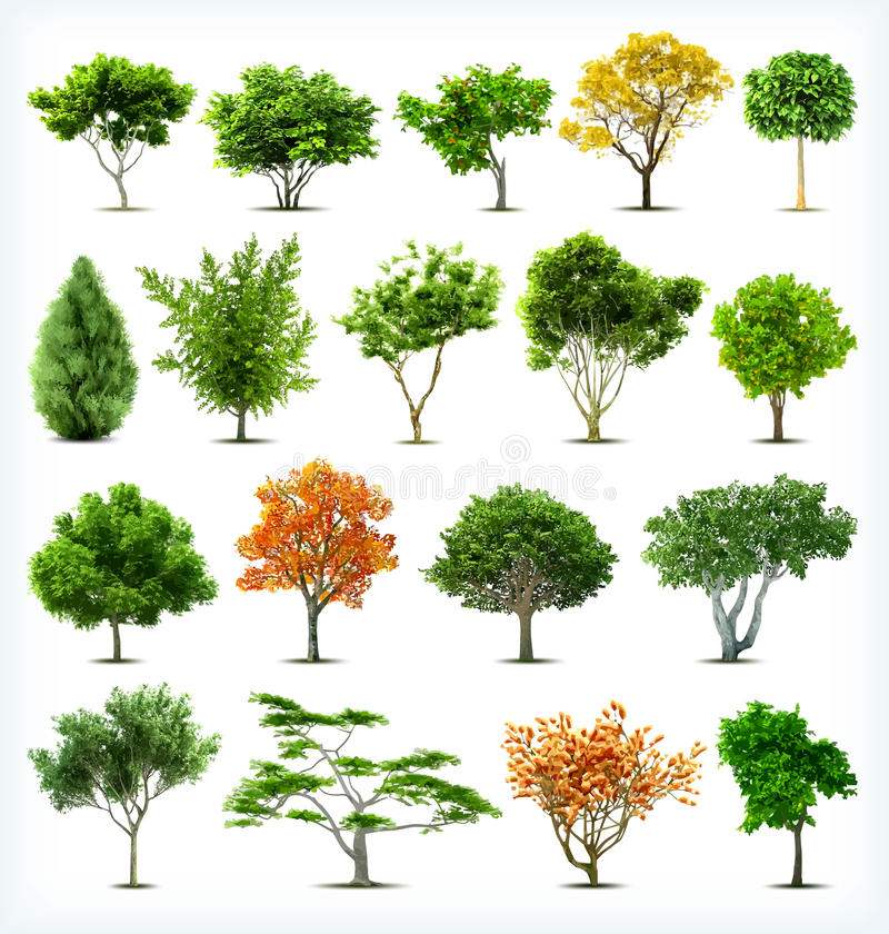 Set of trees isolated. Vector vector illustration