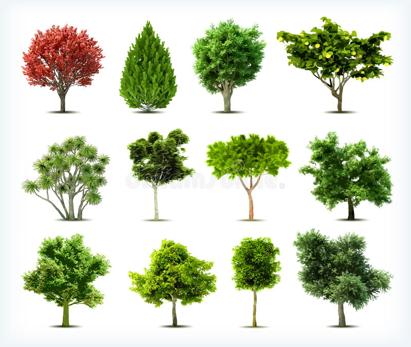 Set of trees isolated. Vector. Set of trees isolated on white background royalty free illustration