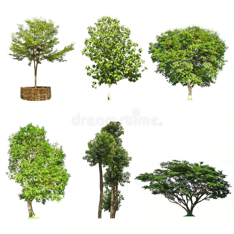 Set of trees isolated on white background stock photos