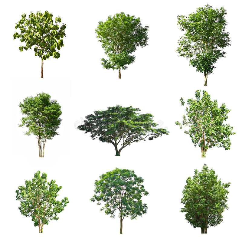 Set of trees isolated on white background stock photos