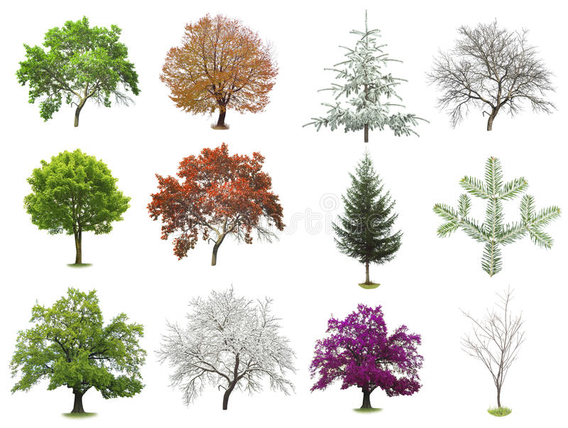 Set of trees isolated stock photos