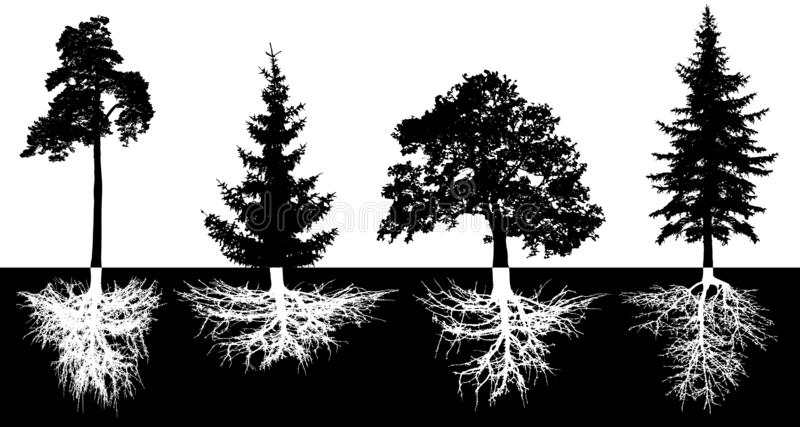 Set of trees with roots, vector silhouette. Forest trees, pine, fir-tree, spruce, oak stock illustration