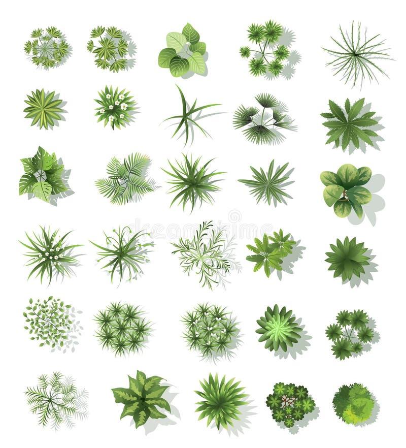Set of treetop symbols, for architectural or landscape design vector illustration