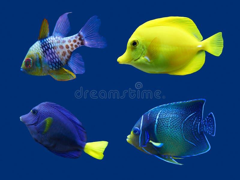 Set of tropical fish. royalty free stock photos