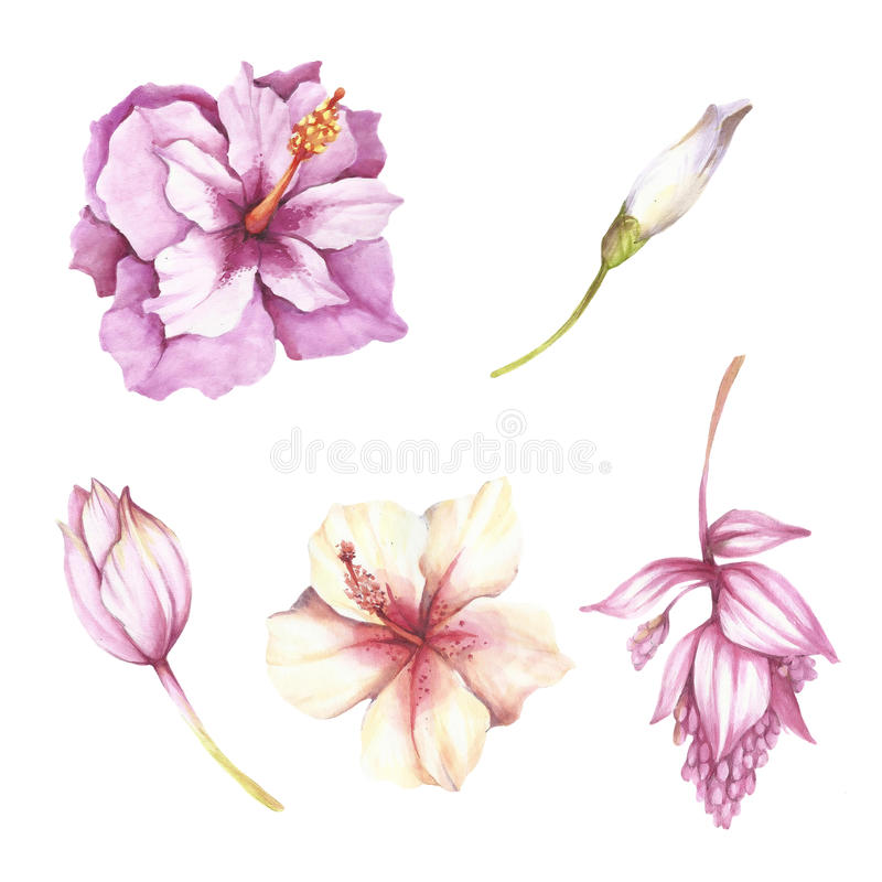 Set of tropical flowers. Hand draw watercolor illustration vector illustration