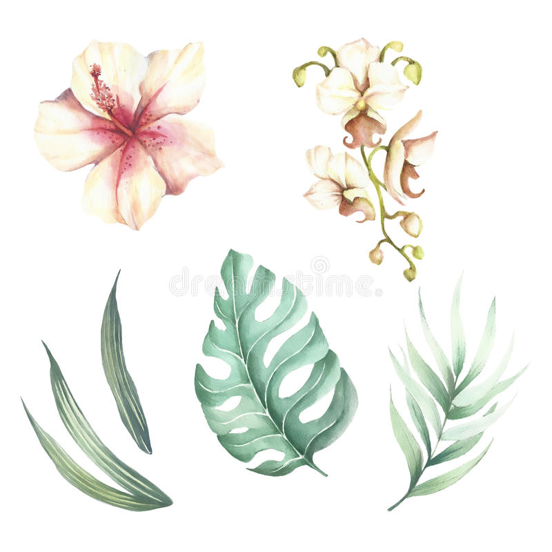 Set of tropical flowers and leaves. Watercolor illustration. royalty free illustration
