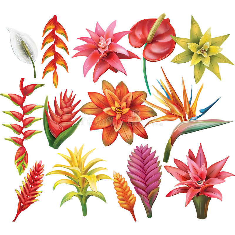 Set of Tropical Flowers royalty free illustration