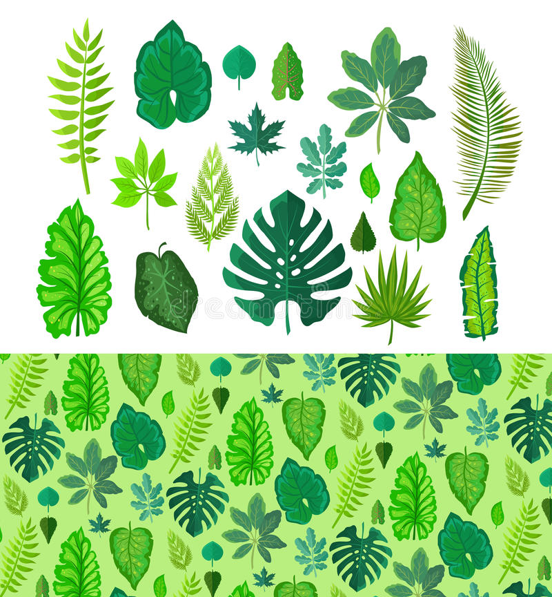 Set of Tropical Leaves. Collection Green Leafs. vector illustration