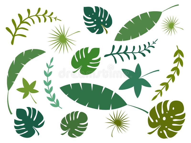 Set Of Tropical Leaves Vector Illustration Isolated On White Background Stock Vector Illustration Of Leaf Fresh 180286943 Learn how to draw tropical leaves pictures using these outlines or print just for coloring. dreamstime com