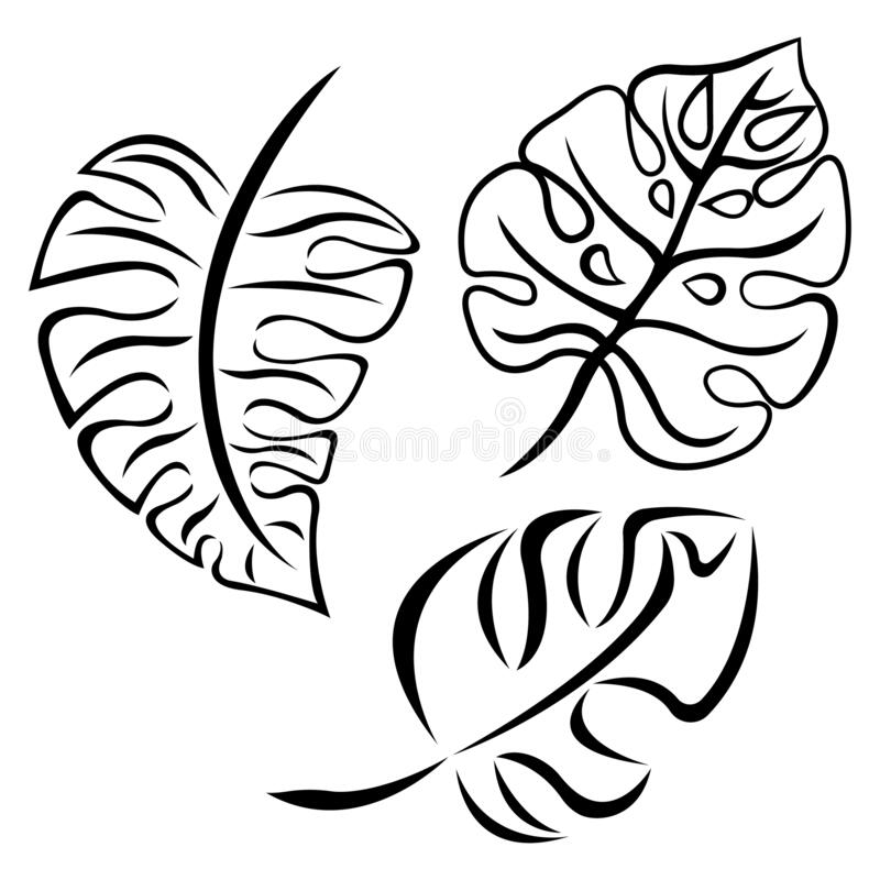 Set Of Tropical Monstera Leaves Palm Leaves Of Black Color In A Flat Style Design Sketch Suitable For Tattoos Botanical Emblems Stock Illustration Illustration Of Creative Decorative 173973711 It is a tropical flower (the state flower of hawaii) and is. tropical monstera leaves palm leaves