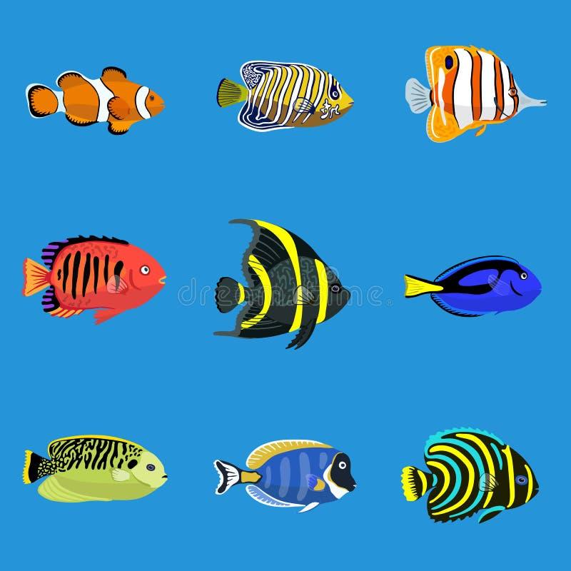 Set of tropical ocean fishes, vector illustration vector illustration
