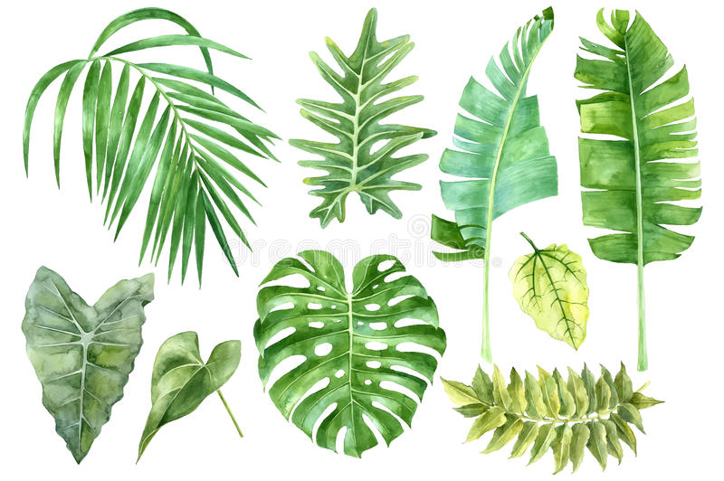 Set of tropical watercolor leaves stock illustration