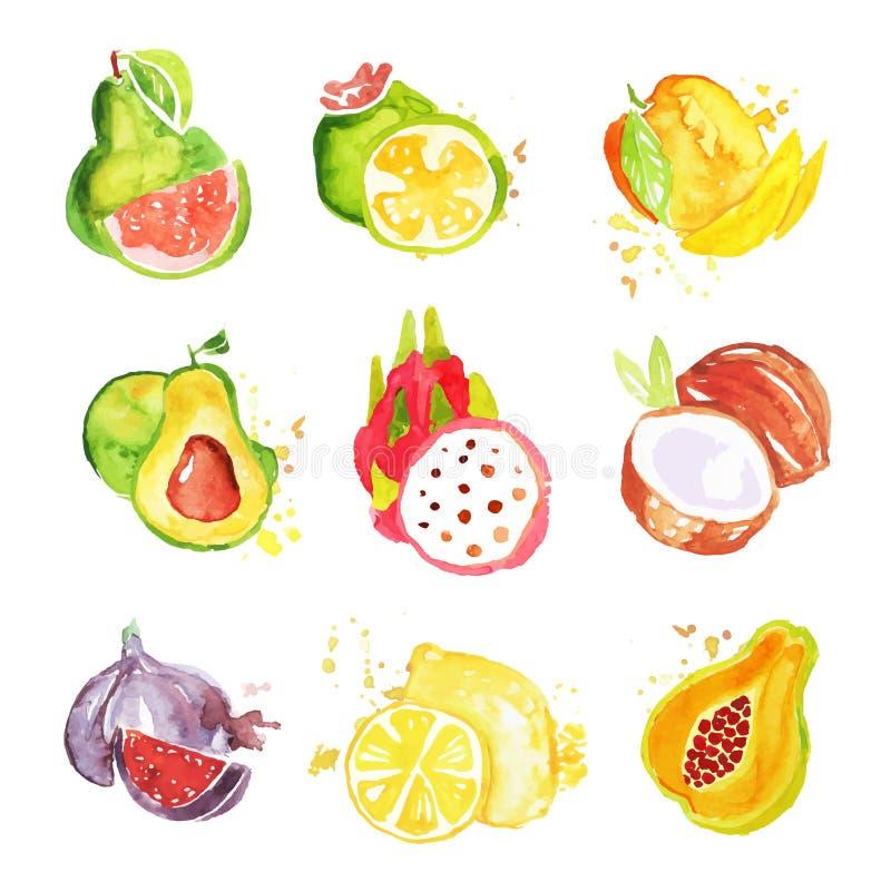 Set tropikalne kolorowe akwareli owoc wektoru ilustracje royalty ilustracja