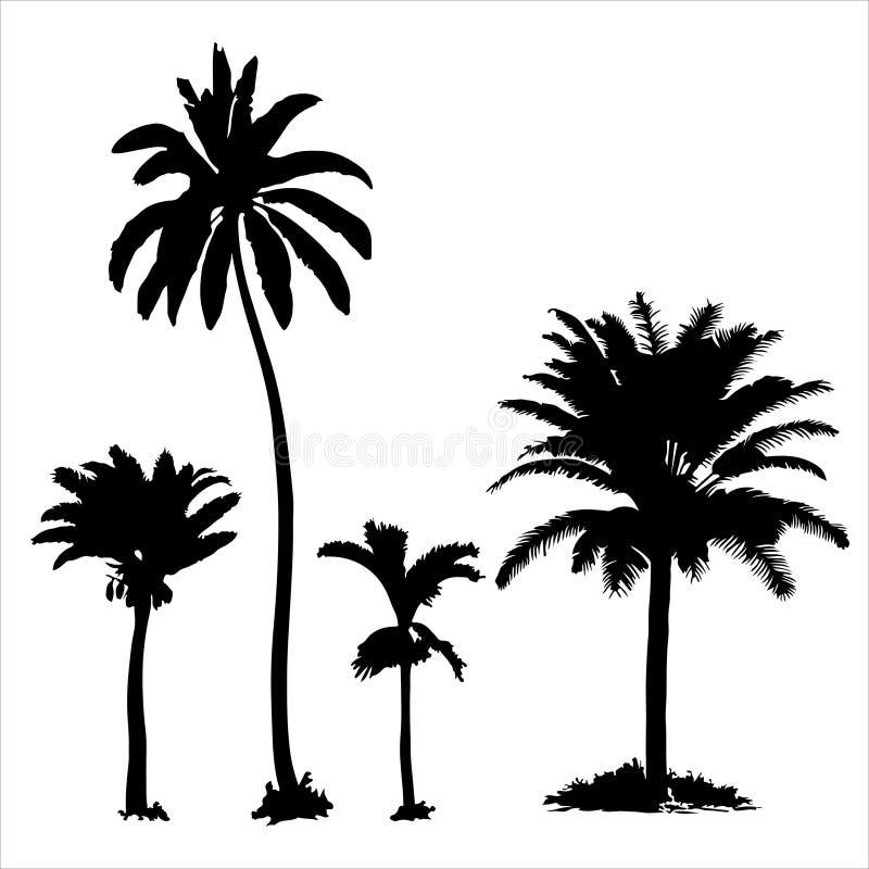 Set tropikalni drzewka palmowe z liśćmi, czarne sylwetki odizolowywać na białym tle royalty ilustracja