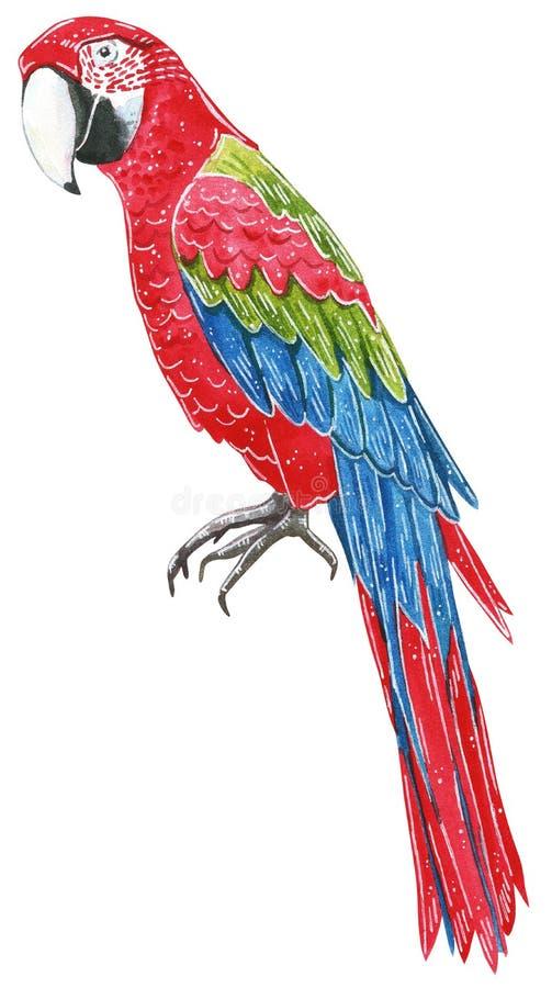 Set tropikalni dzicy ptaki Duzi tropikalni dzicy arony papuzi royalty ilustracja
