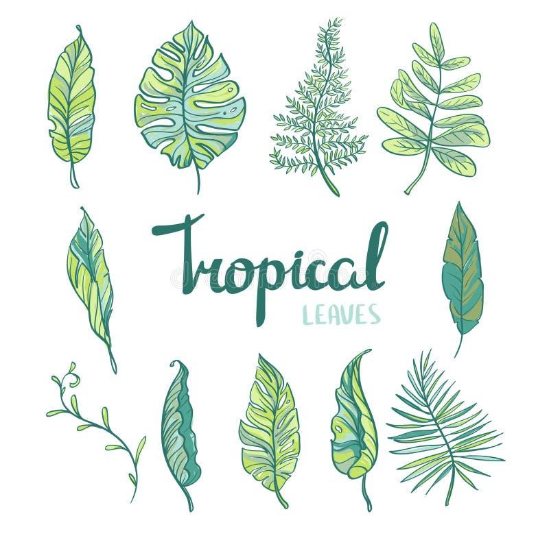 Set tropikalni liście odizolowywający na białym tle ilustracji