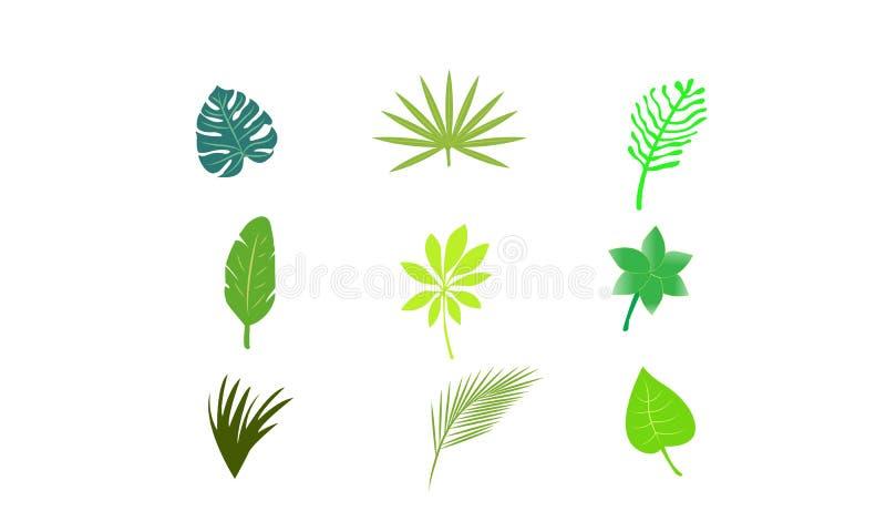 Set Tropikalni liście Wektorowi obrazy stock