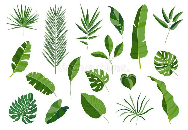 Set tropische Blätter Unterschiedliche grüne Blattsammlung Bunte Vektorillustration auf weißem Hintergrund in der Karikatur lizenzfreie abbildung