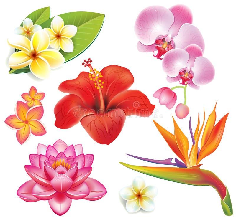 Set tropische Blumen lizenzfreie abbildung