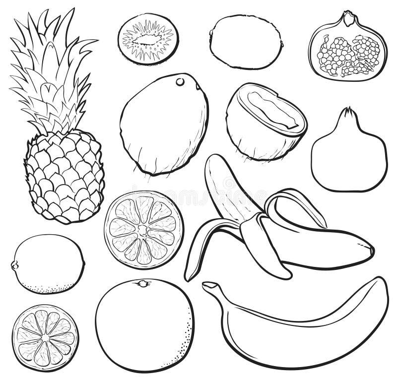 set tropisk white för black vektor illustrationer