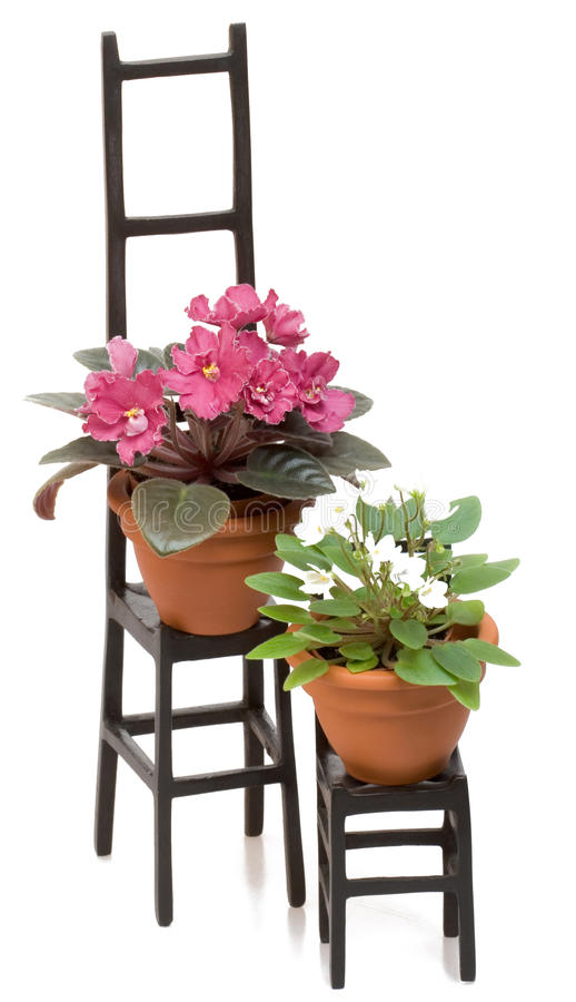 Set of two black chairs and plant pots stock photography