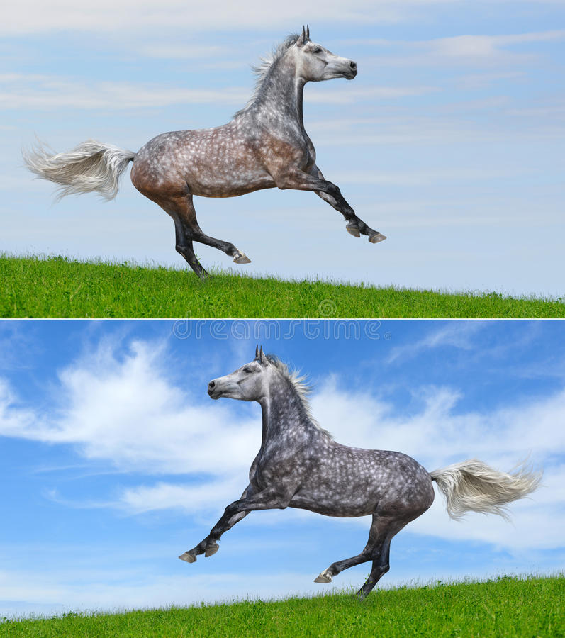 Download Set - Two Various Color Of Galloping Horses Stock Photo - Image of gray, horizontal: 20399420