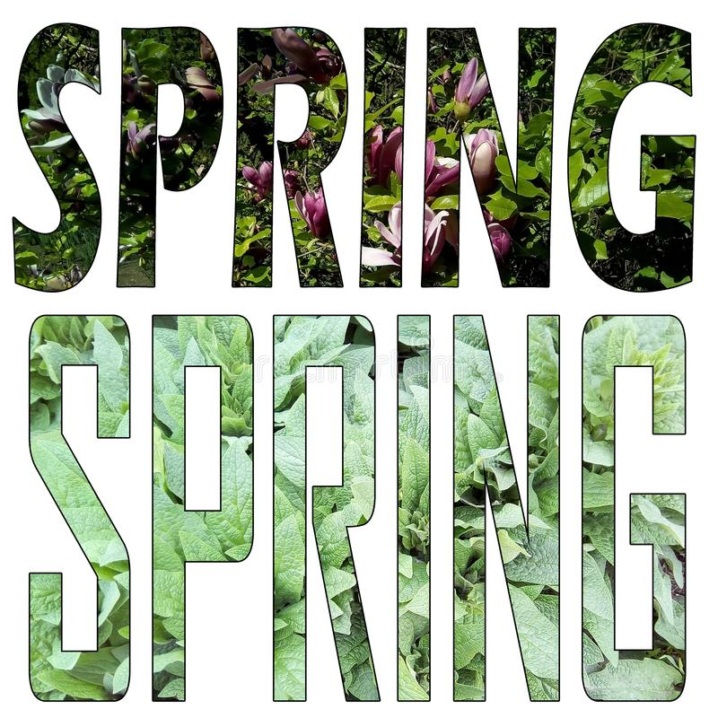 Set of two words `SPRING` isolated on a white background. Textured letters. royalty free stock photo