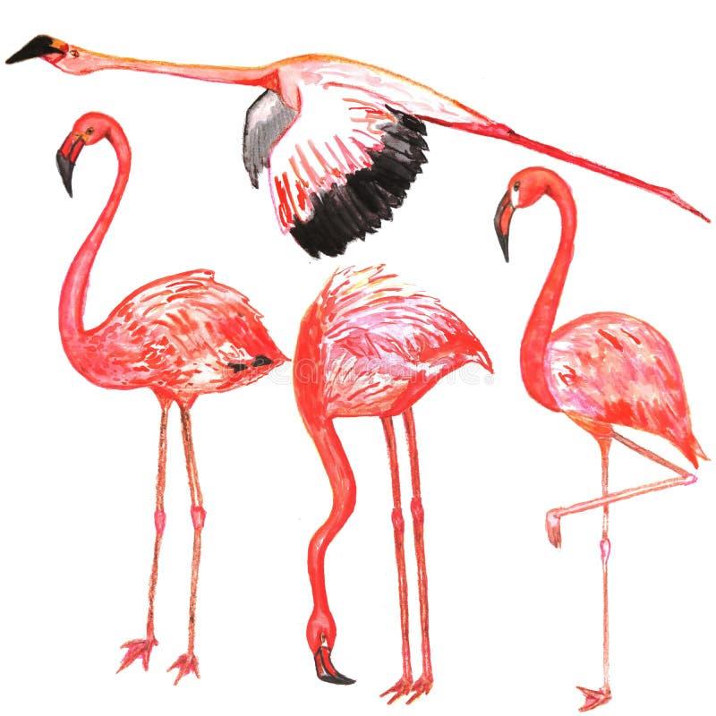 Set Vögel flamingo watercolor lizenzfreie abbildung