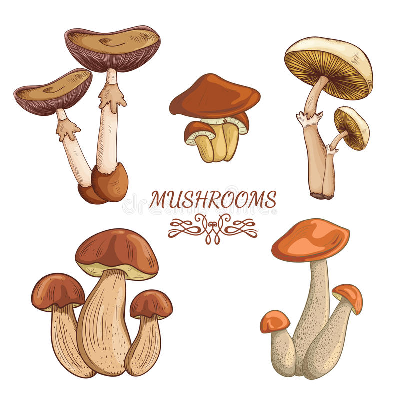 Set with a variety of vintage colorful realistic mushrooms. Retro hand drawn vector illustration stock illustration