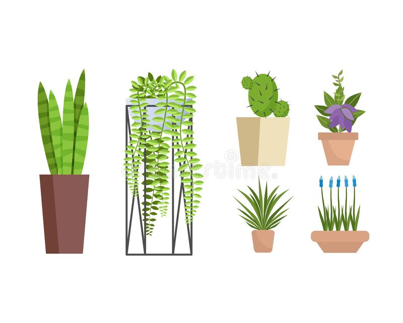Set of various decorative home and office pottery plants. royalty free illustration