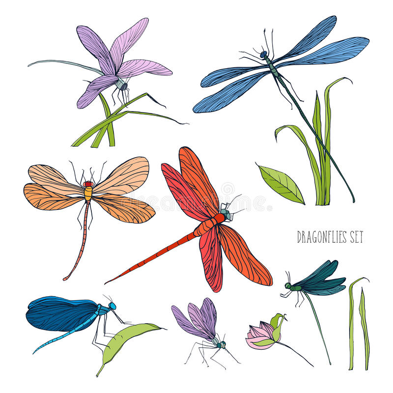 Set of various dragonflies in different poses. Colorful hand drawn collection flying adder. Vector illustration. stock illustration