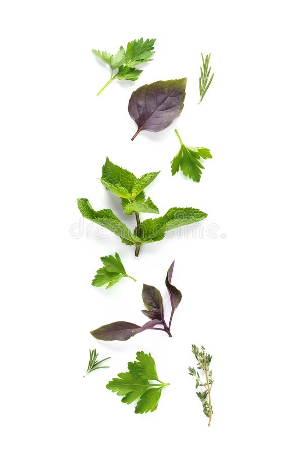 Set of various fresh herbs isolated on white background. Rosemary, parsley, thyme, mint and cilantro stock photos