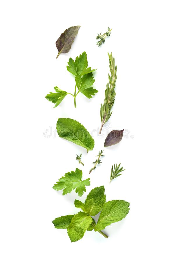 Set of various fresh herbs isolated on white background. Rosemary, parsley, thyme, mint and cilantro royalty free stock photos