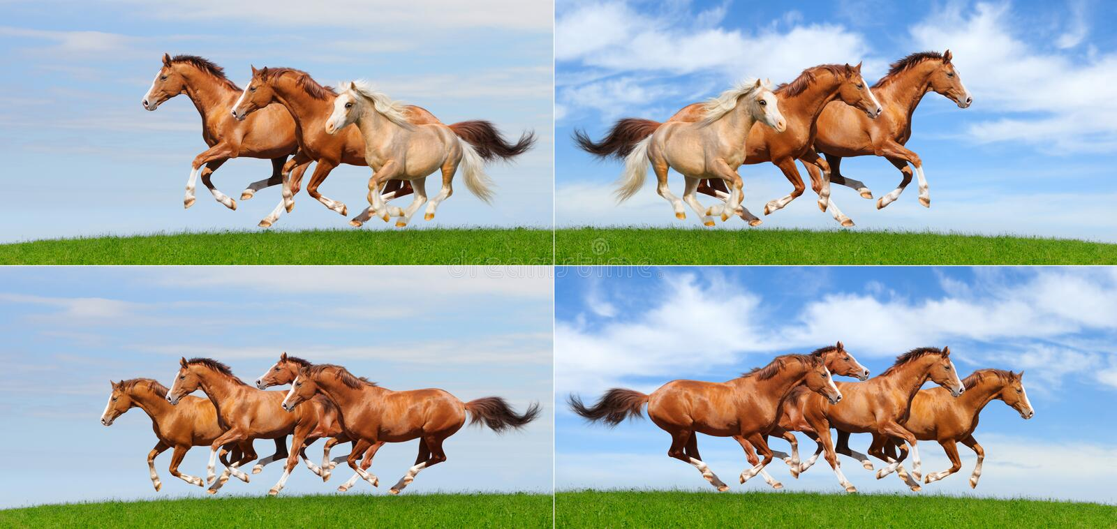 Set - various galloping herd of horses in field stock images