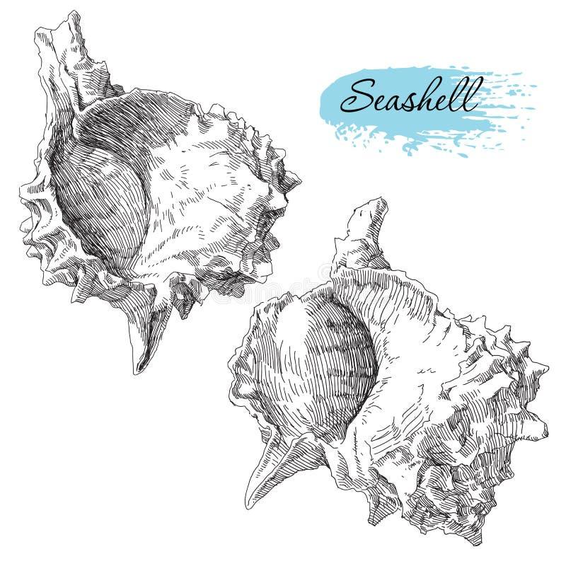 Set of various sea shells. Beauty set of various sea shells royalty free illustration