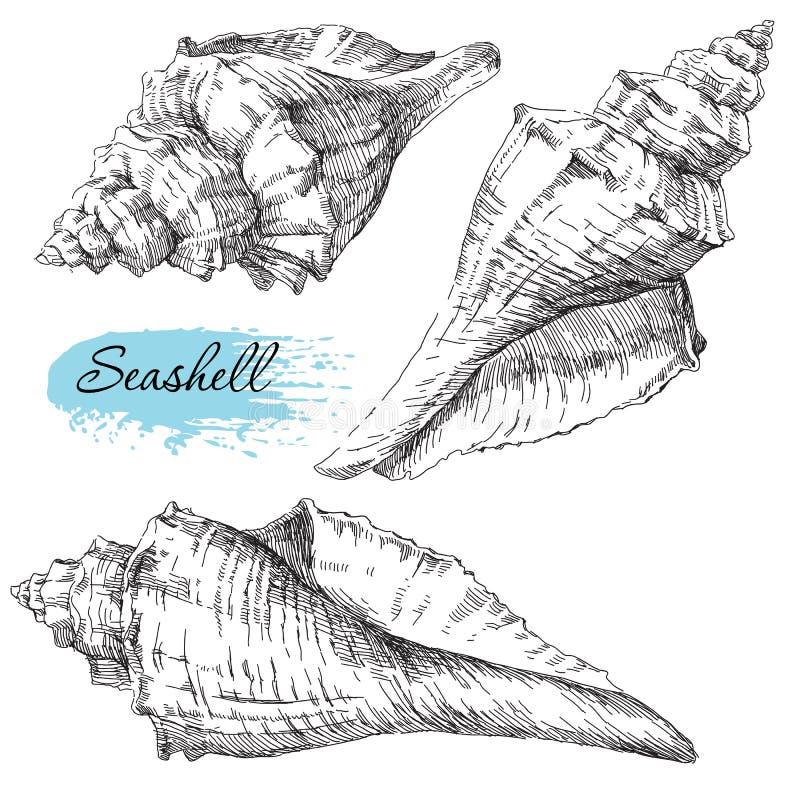 Set of various sea shells. Beauty set of various sea shells stock illustration