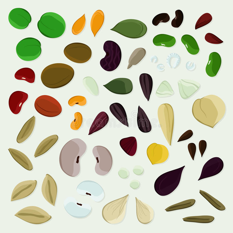 Set of various seeds royalty free stock images