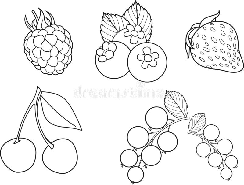 Set of vector berries including vector raspberry, blueberry, fresh strawberry, juicy cherry, gooseberry. Coloring book black and w stock images
