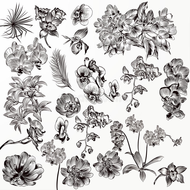 Set of vector detailed orchid flowers vector illustration