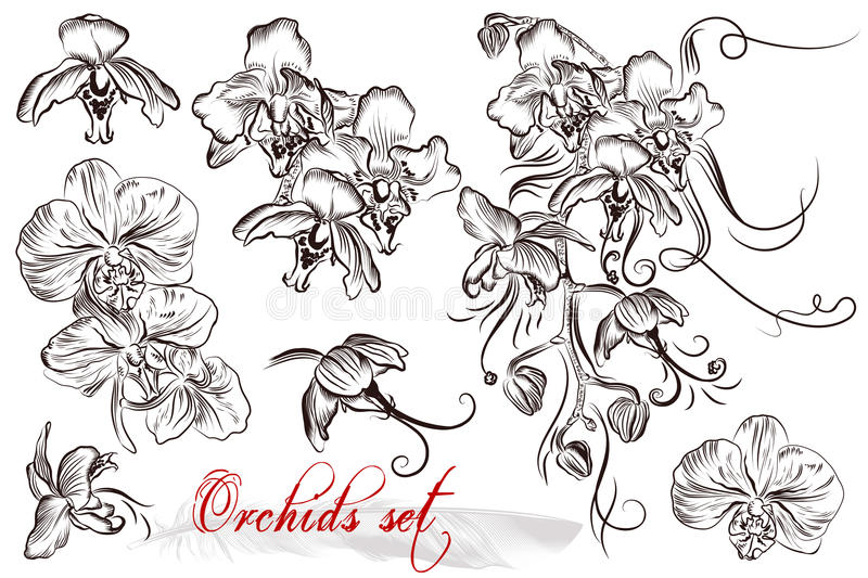 Set of vector detailed orchid flowers royalty free illustration