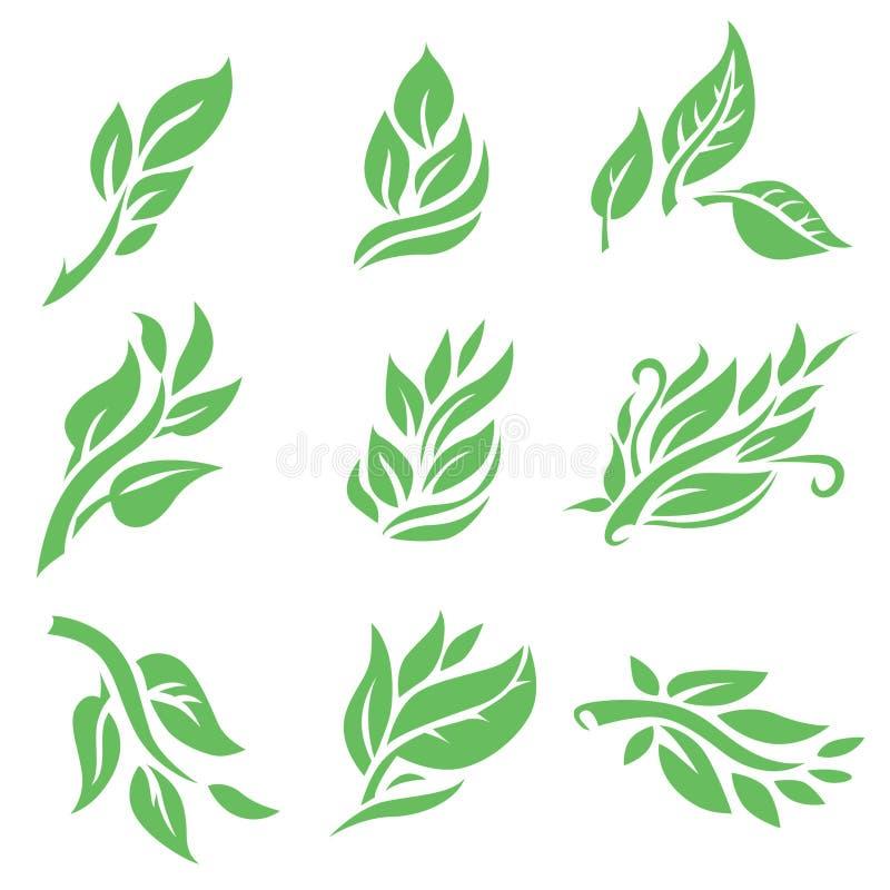 Set of vector floral design element vector illustration