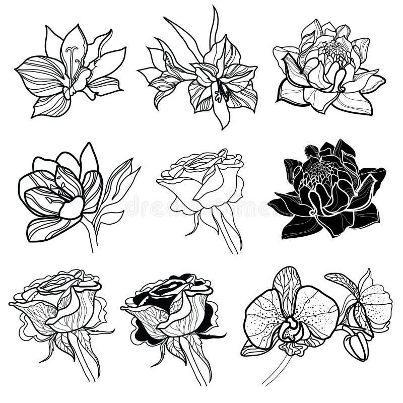 Set of vector floral design elements royalty free illustration