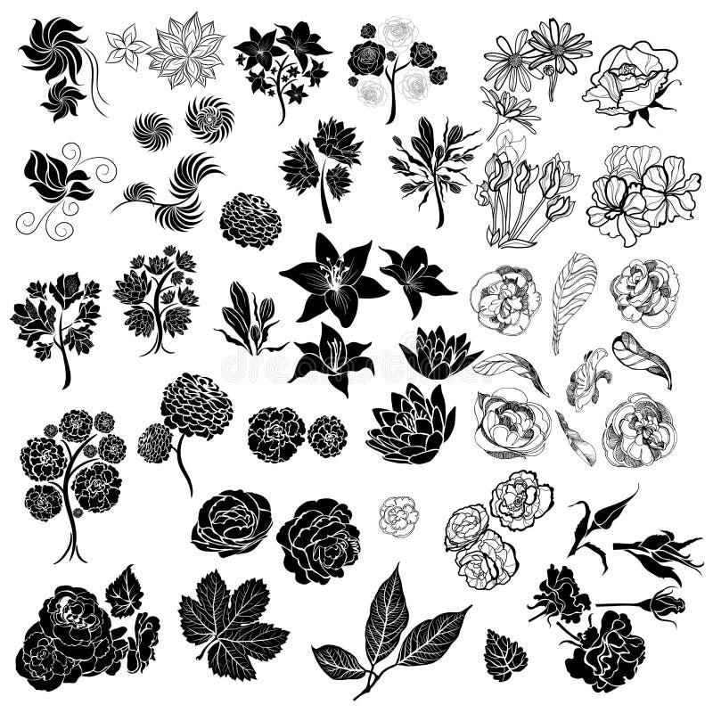 Set of vector floral design elements vector illustration