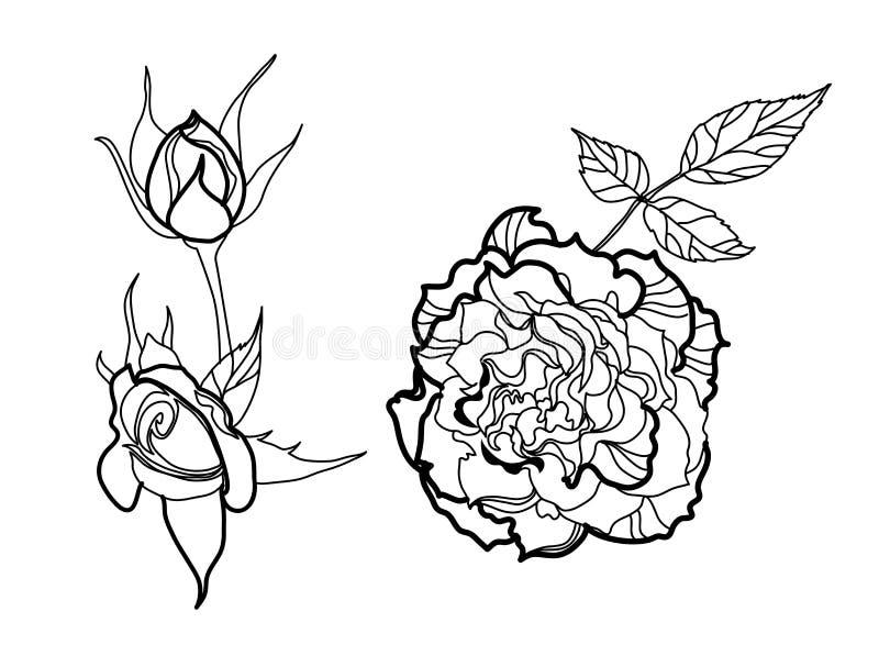 Set of vector floral design elements stock illustration