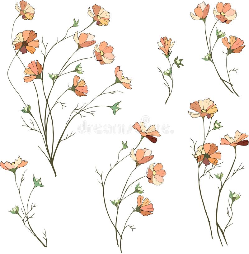 Set of vector flowers from camomiles. Bouquets of small pink daisies on a white background. Hand drawn spring flowers royalty free illustration