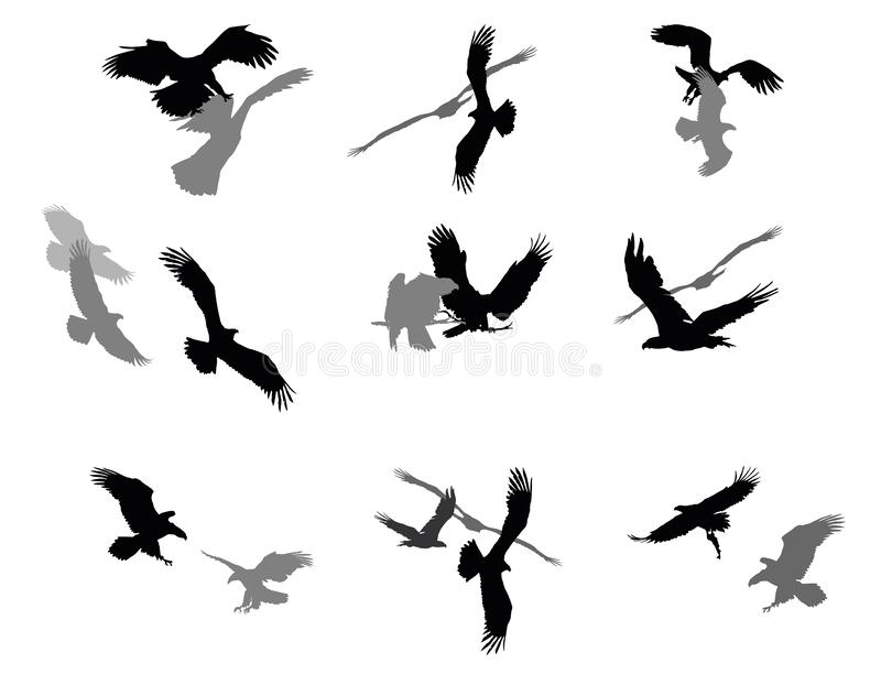 Set of vector group american eagles royalty free illustration