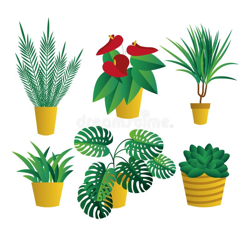 Set of  house indoor plants, potted plants collection on white background. Flat design. Garden stock illustration