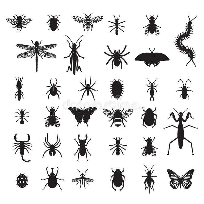Set of vector insects. Eps10 stock illustration