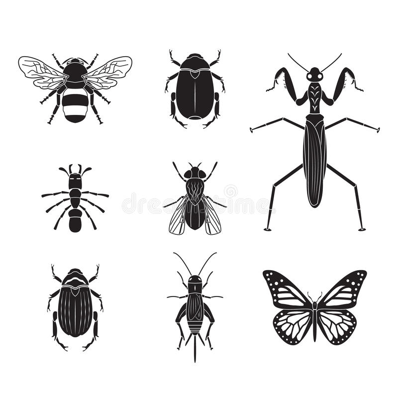 Set of vector insects volume 4. Set of vector insects eps10 vector illustration